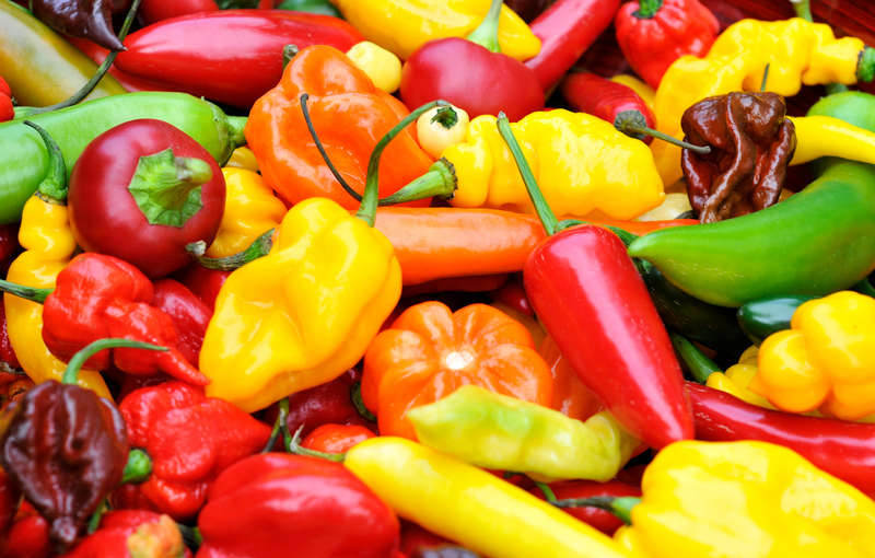 spicy peppers are great for weight loss